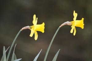 à-l'appel-du-printemps