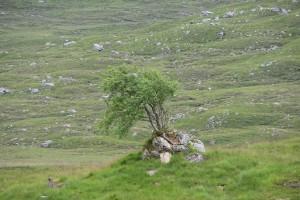Ecosse-l'arbre