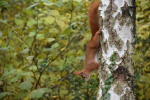 L'écureuil à l'affût (Onex)