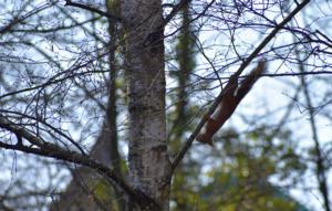 L'écureuil à l'envers avril 2019 Gd-Lancy