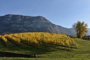 La-vigne-(canton-de-Genève)