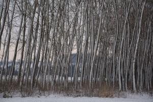 Le-rideau-d'arbres-(Haute-A