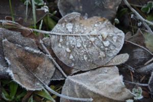 Les feuilles glacées (Genève)
