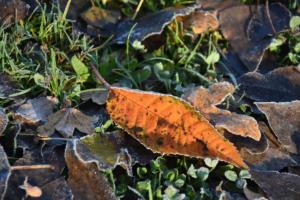 les feuilles (Onex)