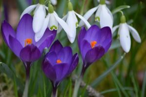 proximité-florale